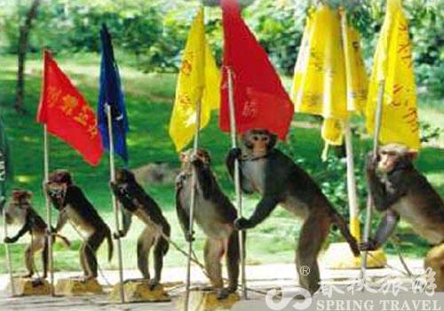 猴岛上有猴子游泳池!而且,旁边还有微型躺椅和遮阳伞呢.