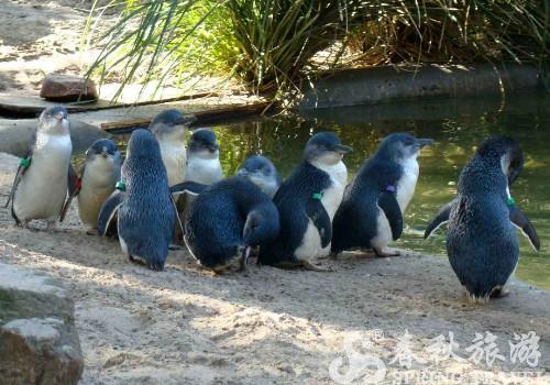 国家动物园及水族馆