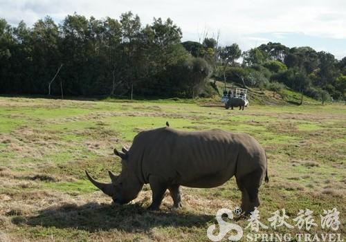 非洲草原一般的华勒比动物园