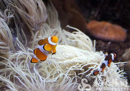 凯利塔顿海底世界