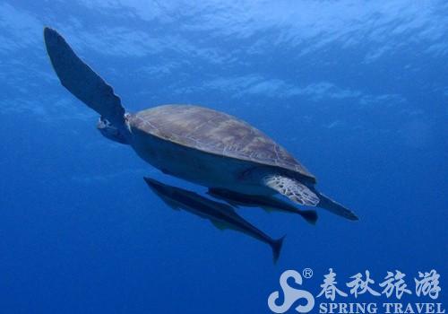 宝宝鲨鱼头发型图片_宝宝鲨鱼头