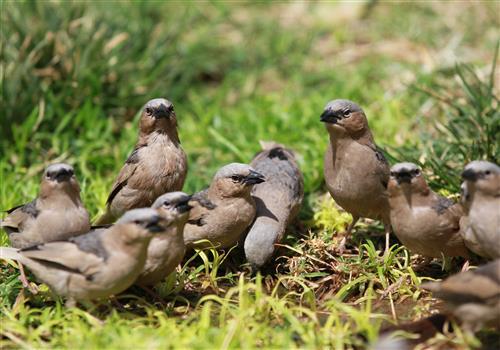 【动物大迁徙●肯尼亚10日●(三晚马赛马拉