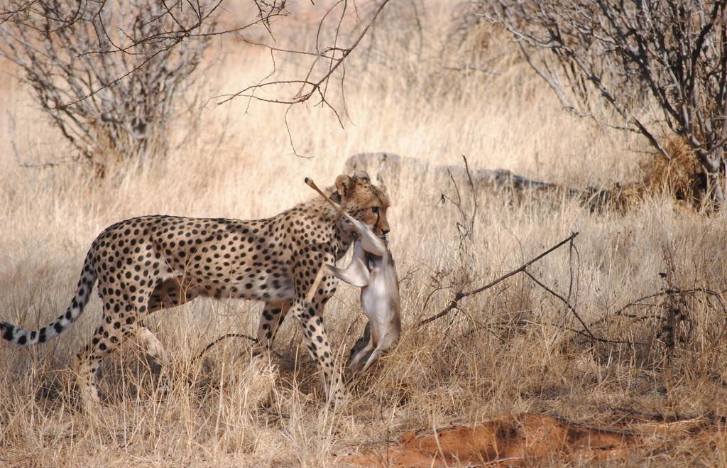坦桑尼亚12天(阿联酋航空+东非全景游+动物大迁徙)